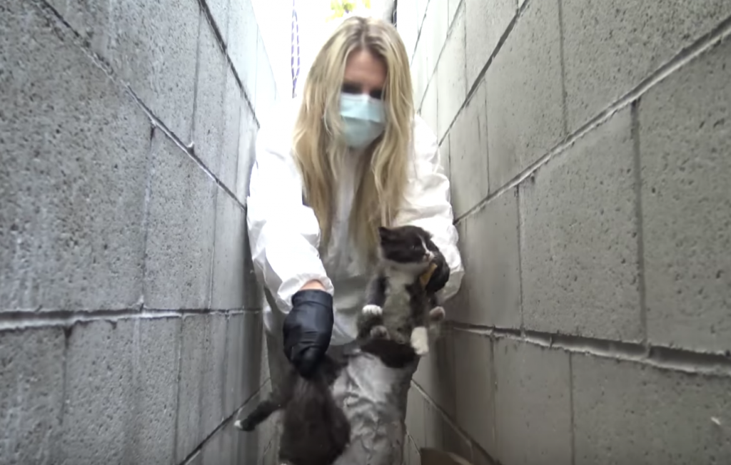 Rescuers Find Motherless Kittens Buried Under A Pile Of Trash