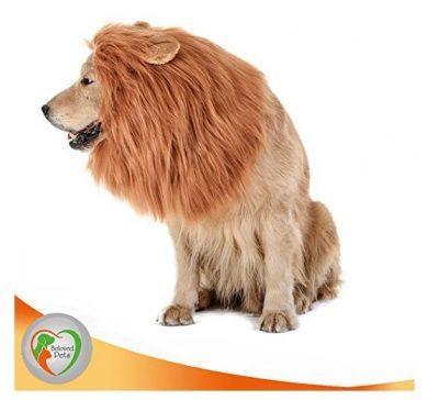 Original Lion Mane for Dog
