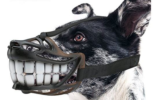 The Most Bizarre And Cool Products That You Can Actually Buy For Your Dog