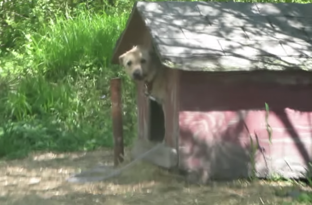 Dog Who Only Knew The Word 'No' Learns What True Happiness Is