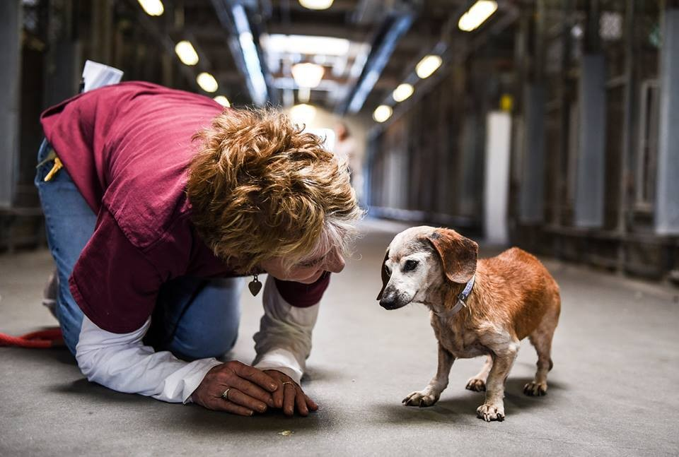 18-Year-Old Blind Dog Meets Her First Person At The Shelter And Refuses To Let Go