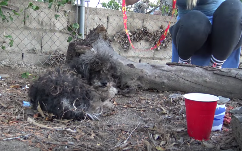 Kids Thought This Abandoned Dog Was Dead, Contacted Rescuers Right Away