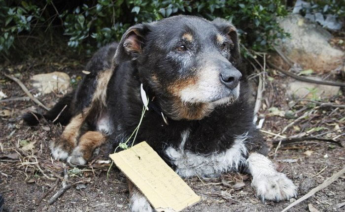 Family Thought They Lost Their Dog Until He Came Back With A Note That Will Melt Your Heart