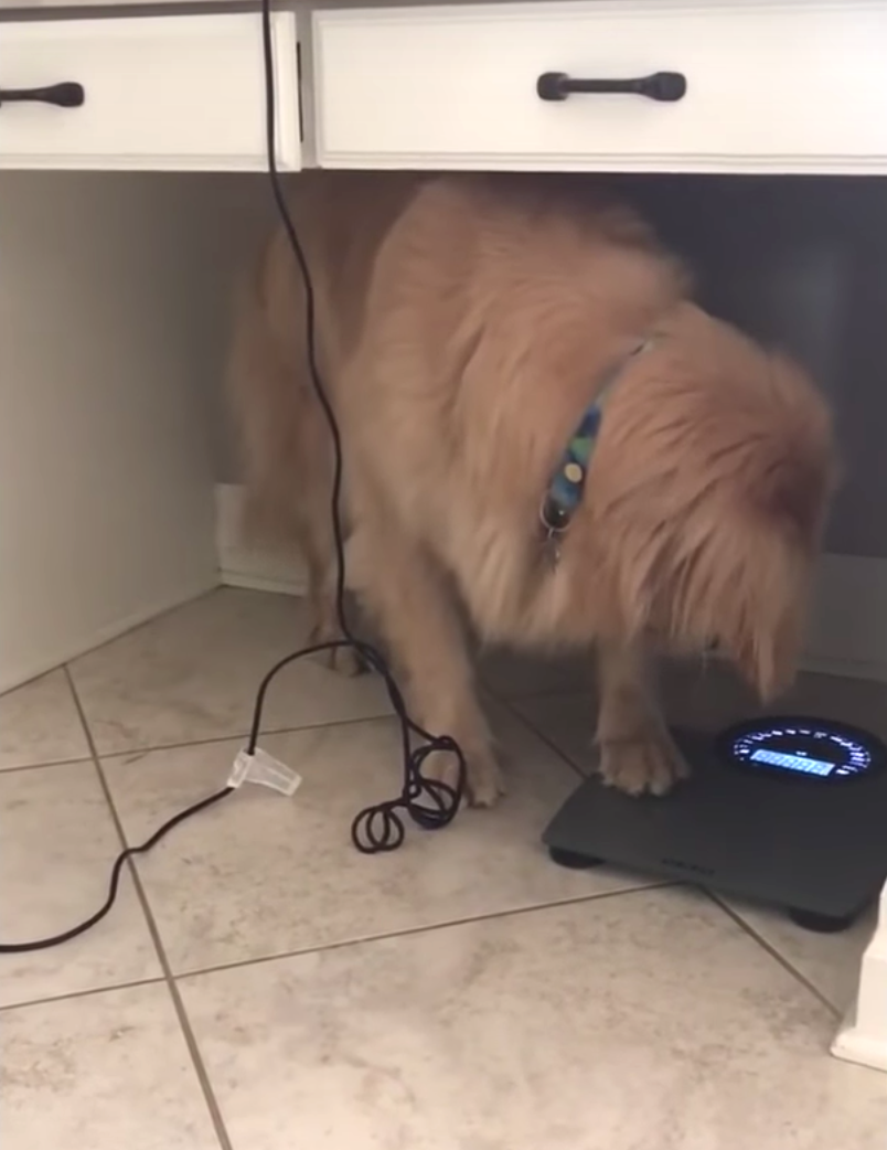 Dog Steps On Scale After The Holidays, Has The Same Reaction As All Of Us