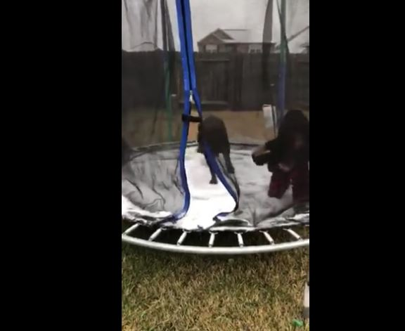 Dog Enjoys Jumping on Icy Trampoline in Texas