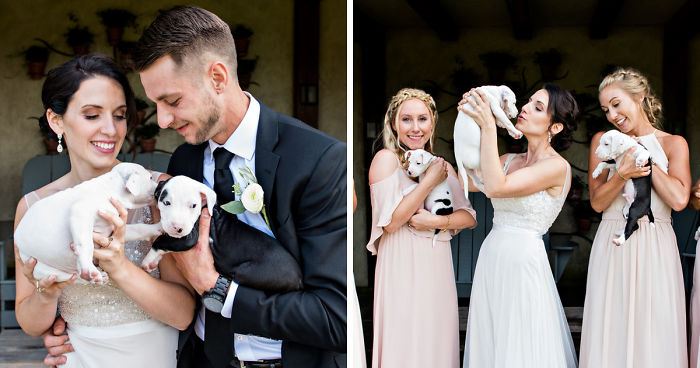A Couple Who Switched Wedding Bouquets With Rescue Puppies