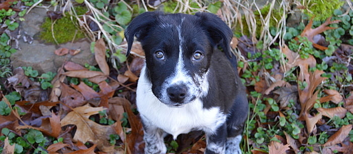 Best Medium Dog Breeds for Families