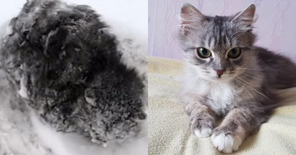 Man Saves Frozen Kitten That Everyone Else Ignored— The Transformation Is Incredible