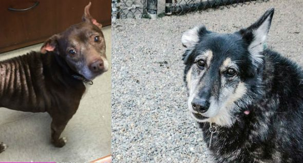 Harley & Zoe Lost Their Humans And Their Homes. Let's Help Them Find New Ones