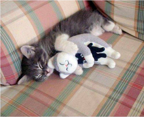 Animals And Their Confusingly Adorable Toy Counterparts