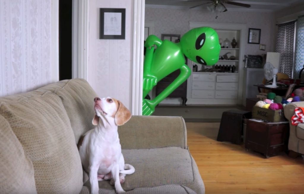 Maymo Gets A Visitor From Outer Space, Handles It In True Guard Dog Fashion