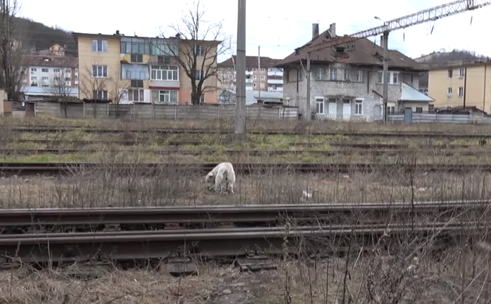 Homeless Dog With A Broken Heart Just Needed A Loving Hand To Touch Him