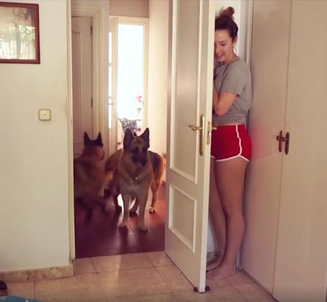 Where'd You Go?! Humans Hiding From Their Pets & Other Hilarious Hijinx