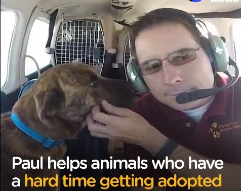 Senior Dog, Long Neglected, Flown To Find Forever Home