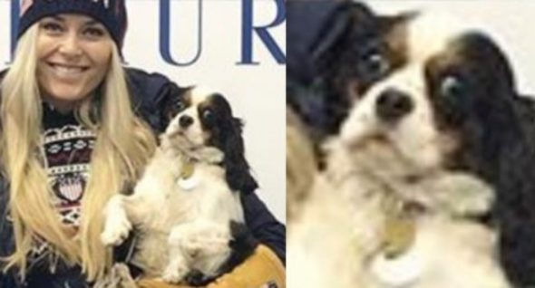 Lindsey Vonn's Dog Makes For Olympic-Sized Laughs On Social Media