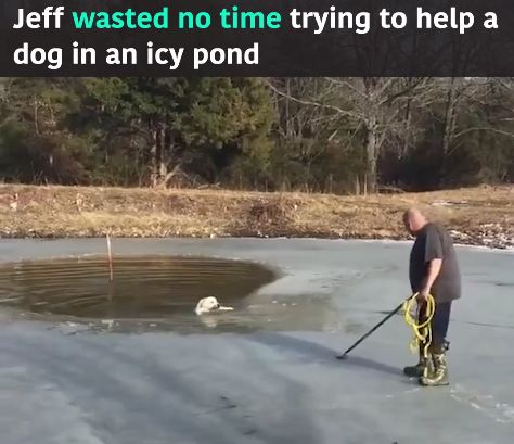 Dog Trapped In Icy Pond Grabs Rope As Neighbor Pulls Him To Safety!