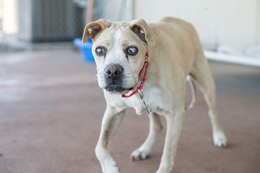 Blind Senior Dog Rescued From Junkyard Seeks A Friend To Share His Twilight Time