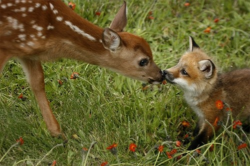 Pics That Show Fawns Are Only Second To Dogs In Overall Cuteness