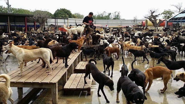 Caring Family Dedicates Their Lives To Helping 3,000 Stray Dogs
