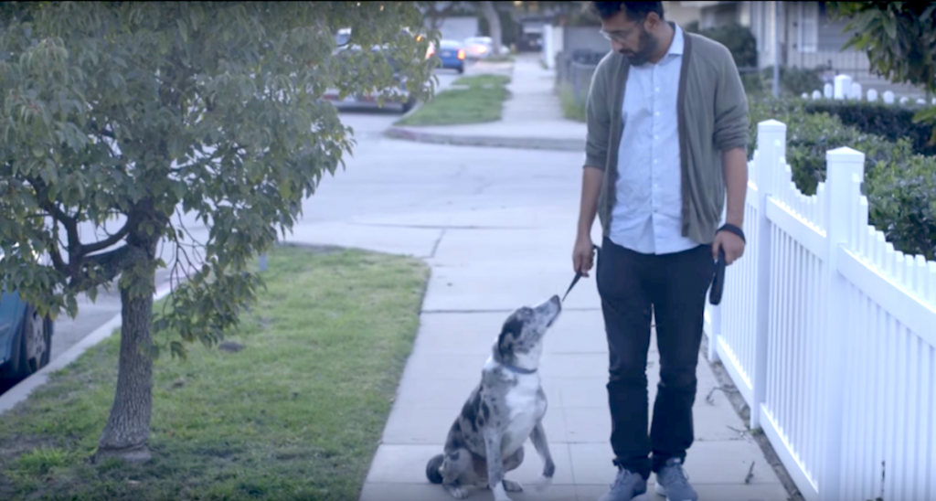 Man Adopts A Senior Dog From The Shelter, One Day It Stops On Their Walk And Looks Up At Him