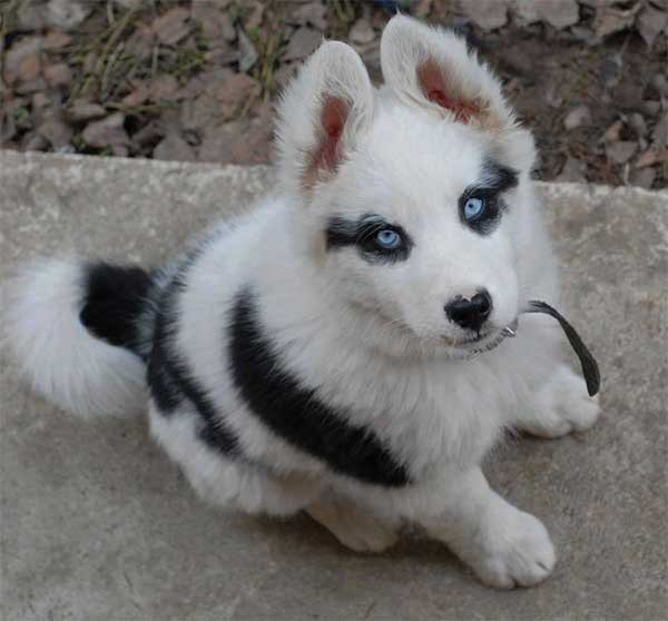 Dogs With Some Of The Strangest And Cutest Fur Markings