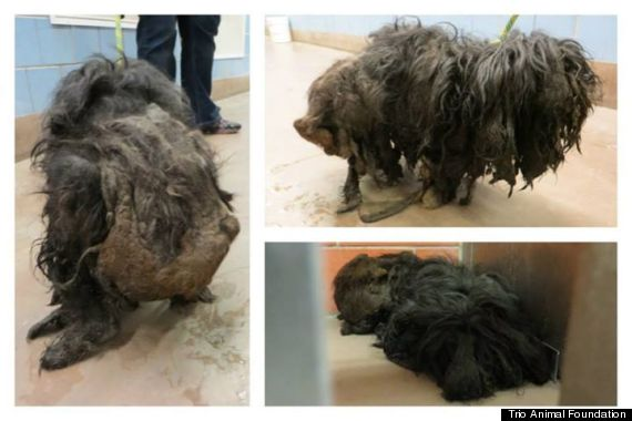 Groomers Remove Two Pounds Of Fur From Stray And See What Kind Of Dog She Actually Is