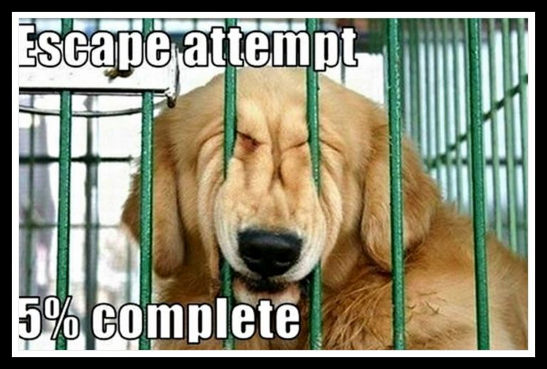 Hilarious Dog Memes To Save The Day