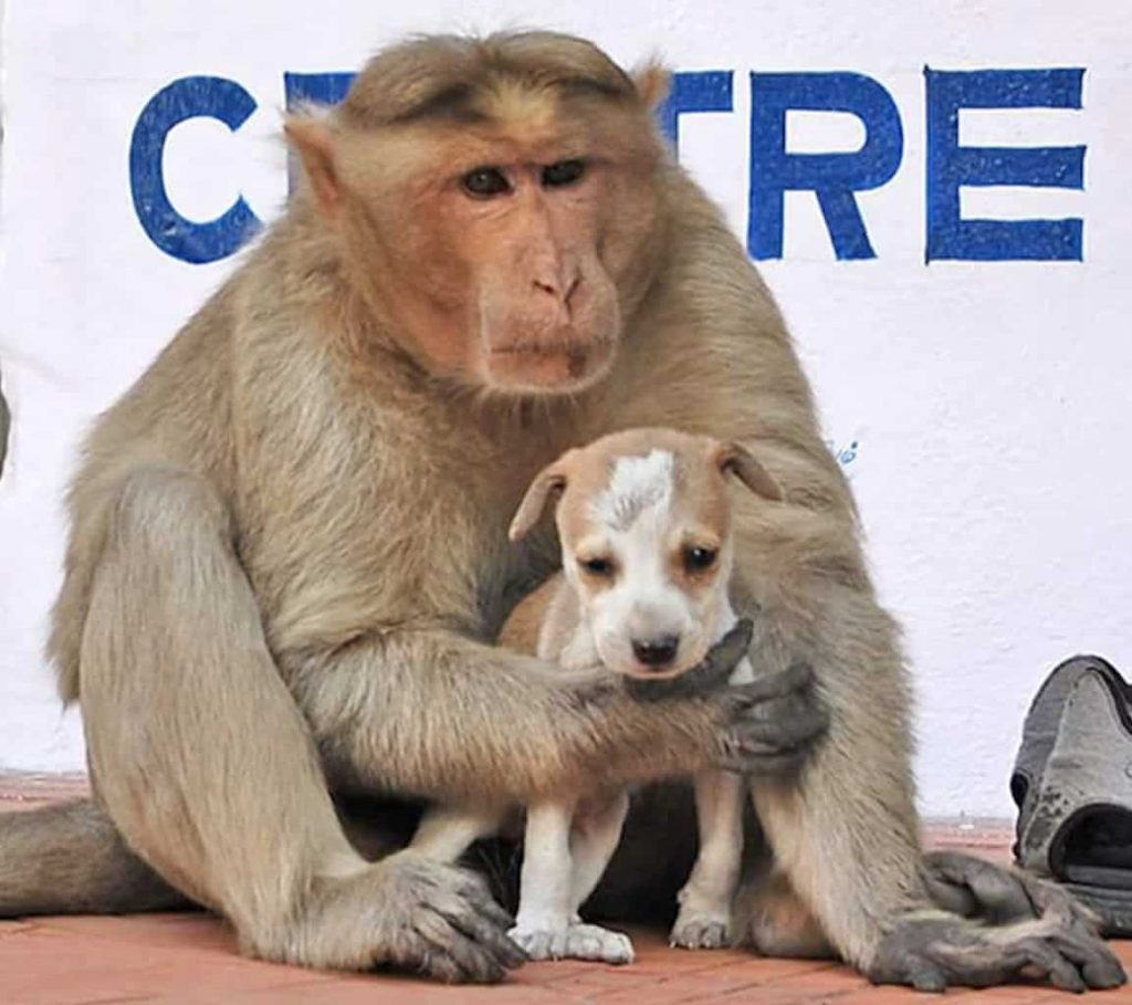 Monkey Snatches Puppy Right Off Of The Street Leaving Onlookers Fearing The Worst