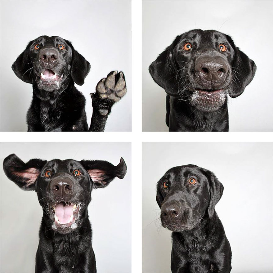 Shelter Uses Photobooth Pics To Help Dogs Get Adopted