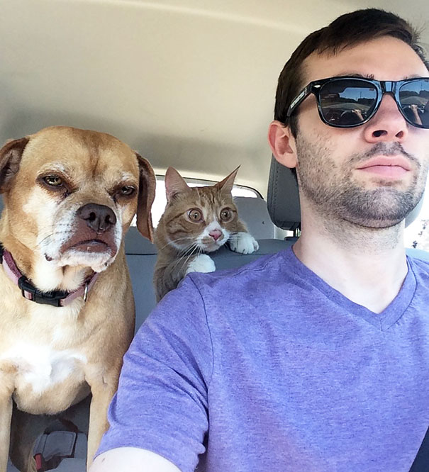20 Times Dogs Realized They're Going To The Vet And Not The Park