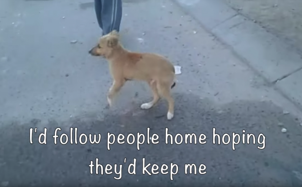 Lonely Street Dog Tried Following People Home, But They'd Kick Him