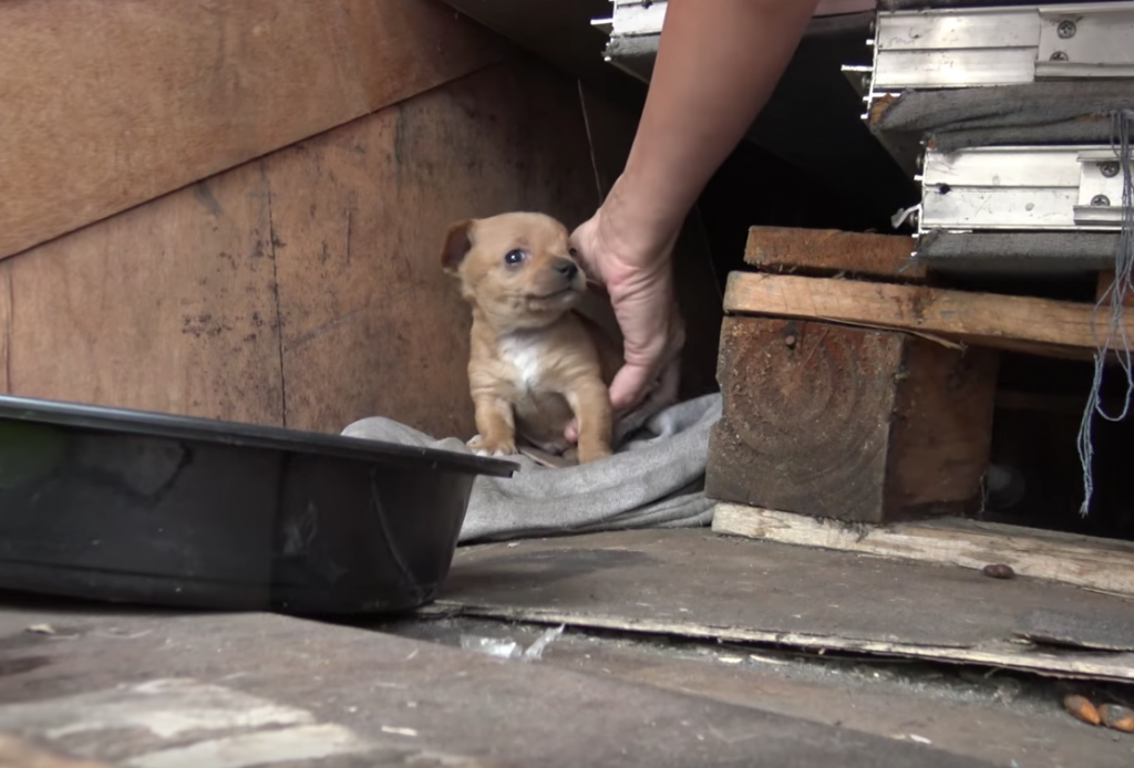 Rescuers Go To Save A Mama And Pups At A Shipping Yard, But They're Not Welcome On Premises