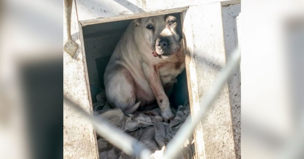 Dog Is Left In Crate When Family Moves Without Her, Still Finds It In Herself To Trust People