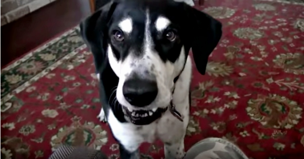 Dad Tells Dog He Adopted A Kitten In Hilarious Video
