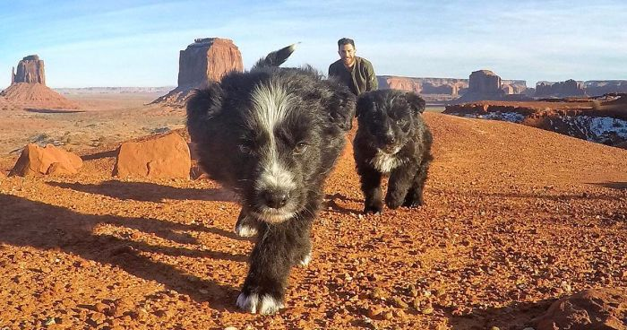 Man Finds Two Puppies Abandoned In The Middle Of The Desert, Takes Them On Epic 30,000-Mile Trip