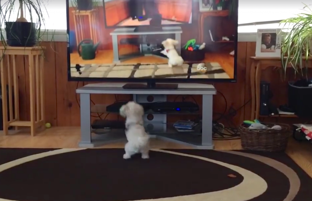 Dad Catches Dog Hilariously Responding To Commands On The TV