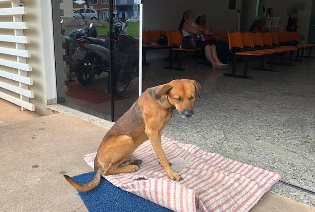 Loyal Dog Shows Up To The Hospital Every Single Day For Months To Wait For His Deceased Owner