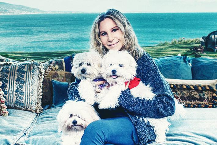 Barbra Streisand's Beloved Dog, Samantha, Lives On … Via Her Clones