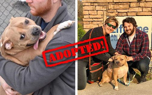 "Dog Returned To Shelter For Being ""Too Nice"" Finds Family As Nice As She Is"
