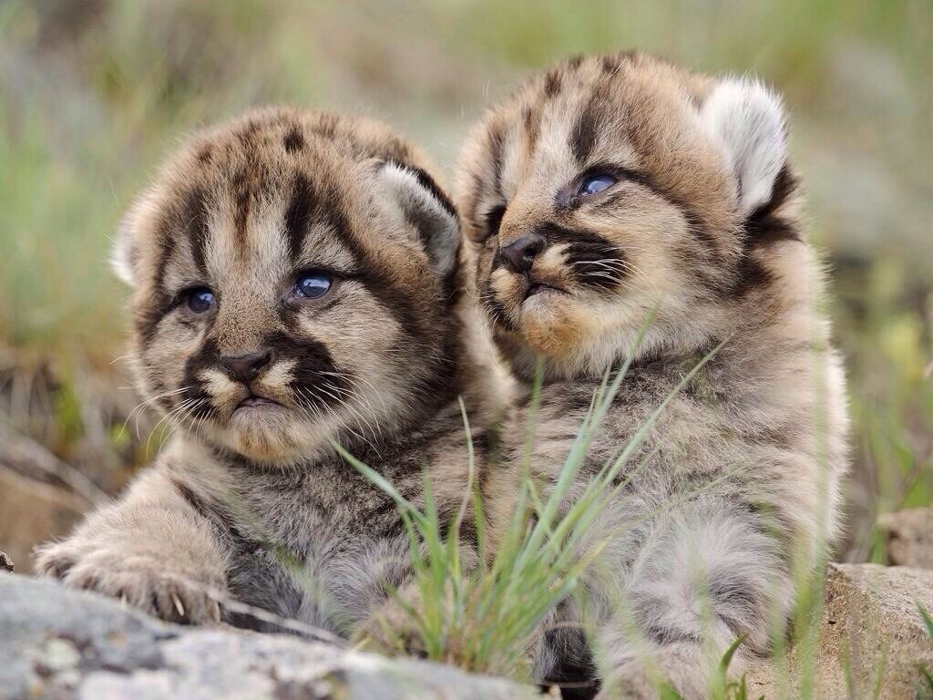 Animals You Rarely Ever See As Babies