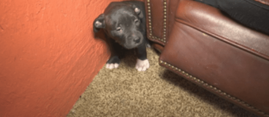 3 puppies die after bees attacked home with excessive clutter