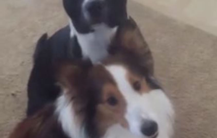 Dog Wastes No Time To Throw Best Pal 'Under The Bus'