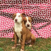 Bonded friends just want to be loved, but nobody wants them