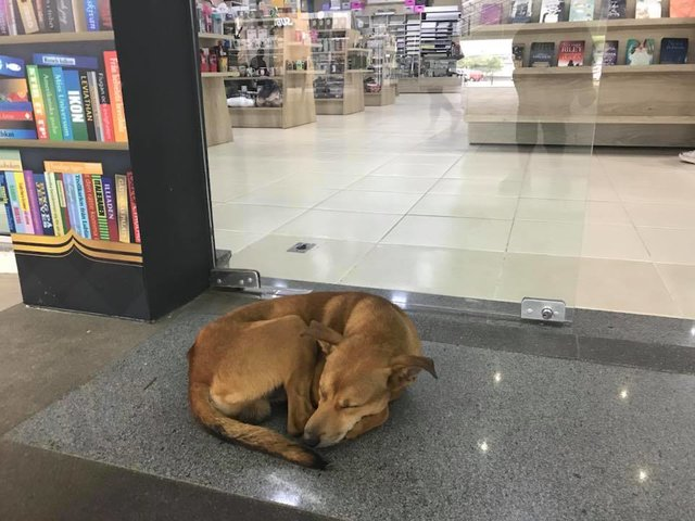 Stray Dog Wanders Into Bookstore And Steals A Book On Abandonment