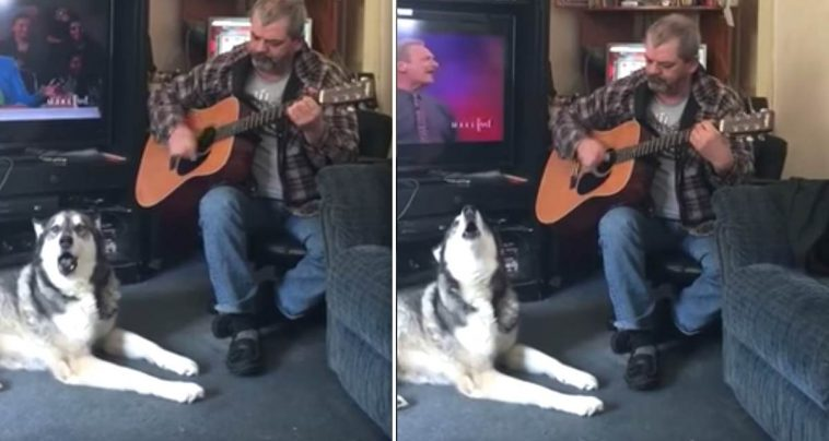 Dog Shows Off His Lovely Singing Voice While Dad Strums the Guitar