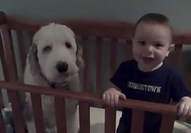 Dad Walks In And Asks The Toddler About The Dog In His Crib