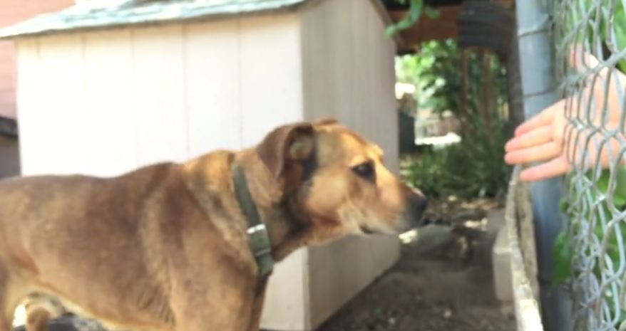 Owner Laughs When Approached About Her Dog Who'd Been Chained Up For 10-15 Years