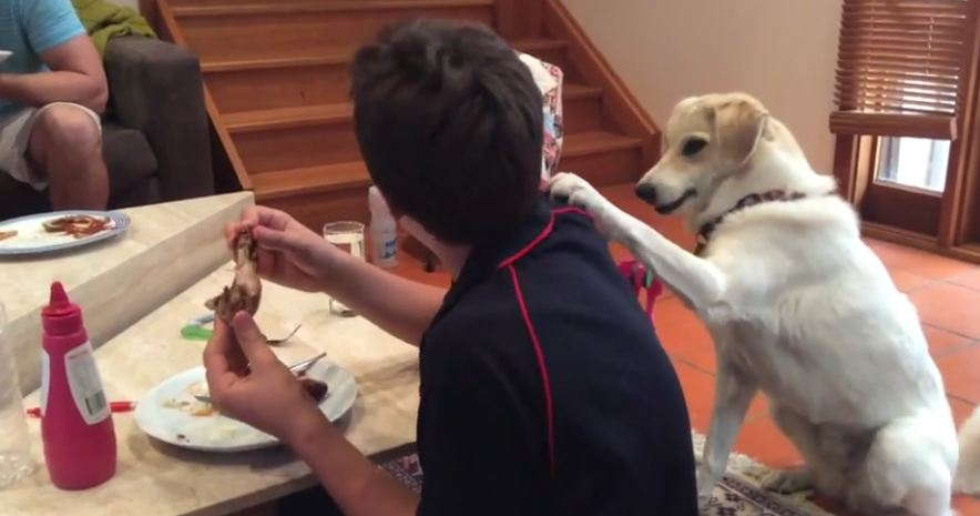 Rescue Dog Hilariously Pats Owner's Shoulder To Get A Bite Of His Food