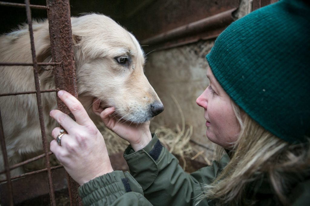 Dogs Found On A Meat Farm Are About To Try Their First Treats