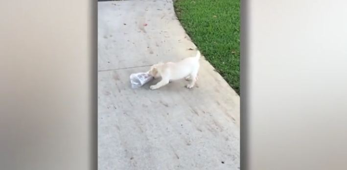 Dad Notices His Puppy Wrestling At The End Of The Driveway And Runs Over To Help
